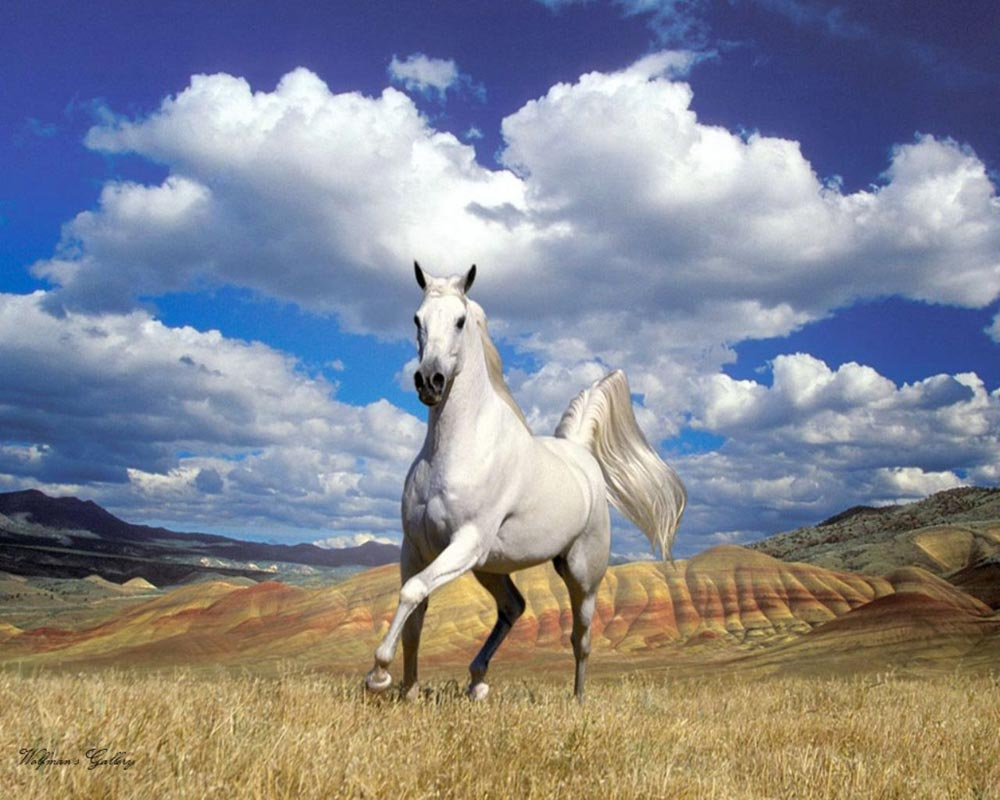 Galloping white horse - photo#27