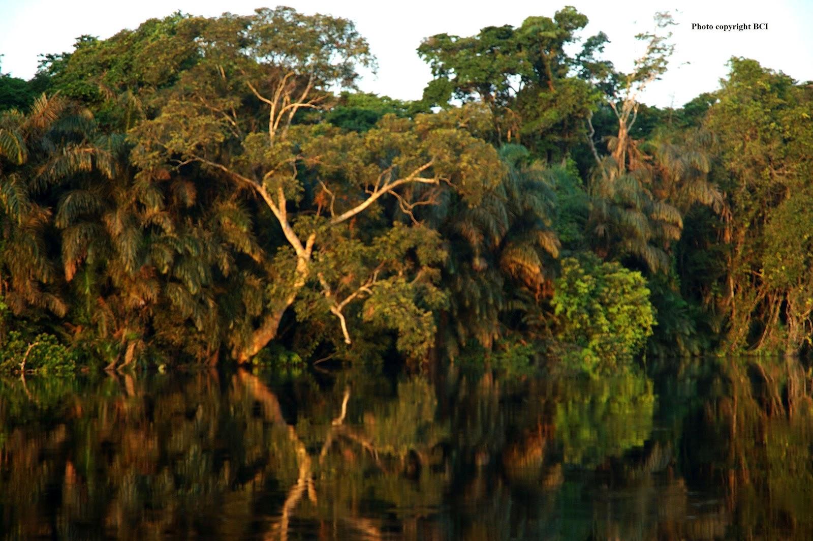 http://3.bp.blogspot.com/-SfghQYFQZ_U/UCnAAI8mcPI/AAAAAAAABtc/fPZADT8gr04/s1600/floresta+do+congo.jpg