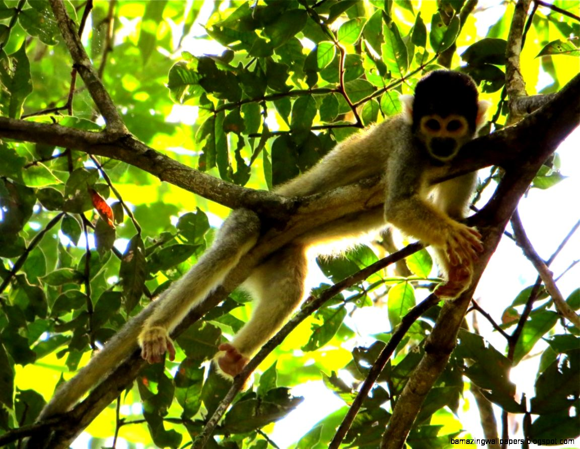 How to Spot a Monkey in the Rainforest  Peru Nature Blog
