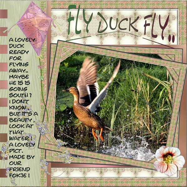 .. Fly Duck , Fly..