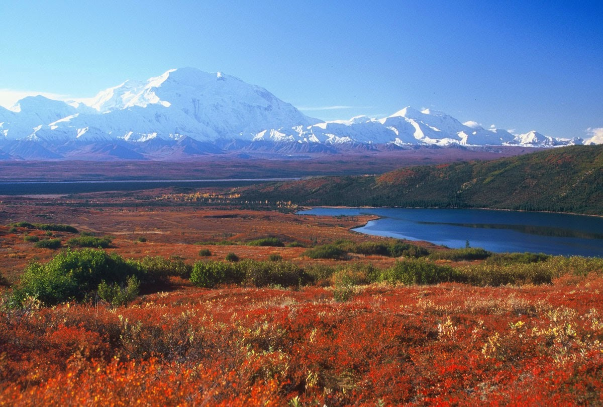... are twomajor tundra biomes—The Artic Tundra and the Alpine Tundra