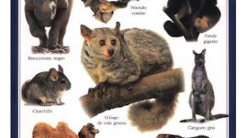 Dos Guias sobre Los Mamiferos | Ciencias Naturales