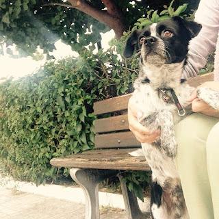 Βρέθηκε στην περιοχή της Μεταμόρφωσης μικρόσωμο σκυλάκι περίπου δύο χρόνων χωρίς τσιπακι.