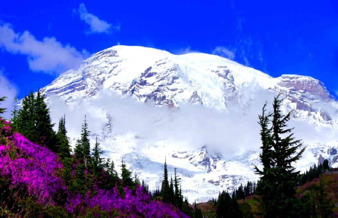 Mountains Mount Rainier Mountain Flowers Majestic Spring Snow