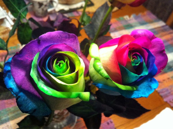 Stellar four roses are red and blue and green and yellow for How to dye flowers using food coloring