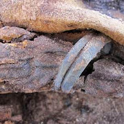 Археологи нашли 1 миллион мумий