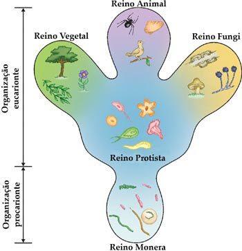 Classificação dos seres vivos - dividido em cinco reinos