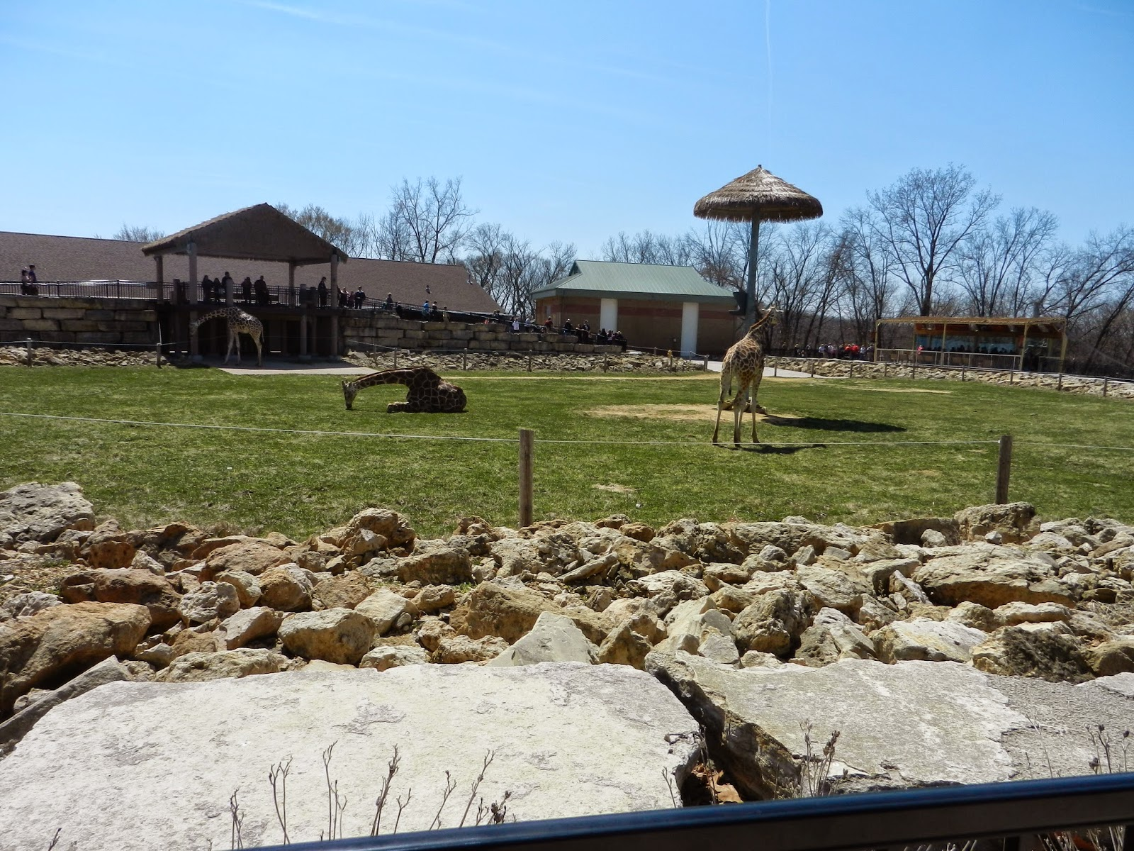 Niabi Zoo Quad Cities giraffe exhibit