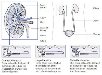How Diuretics Works