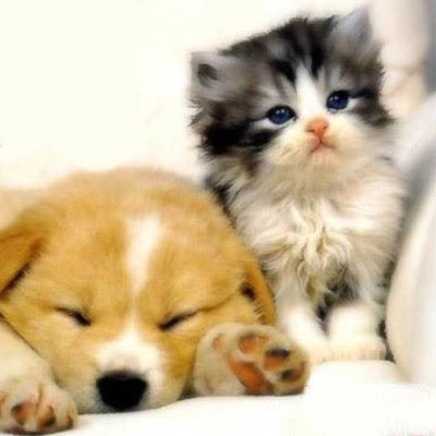 Funny Animals Cute Puppies And Kittens Photos