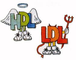 LDL Cholesterol - What is Low Density Lipoprotein