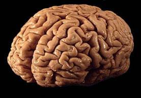 Image Obat kanker otak herbal alami