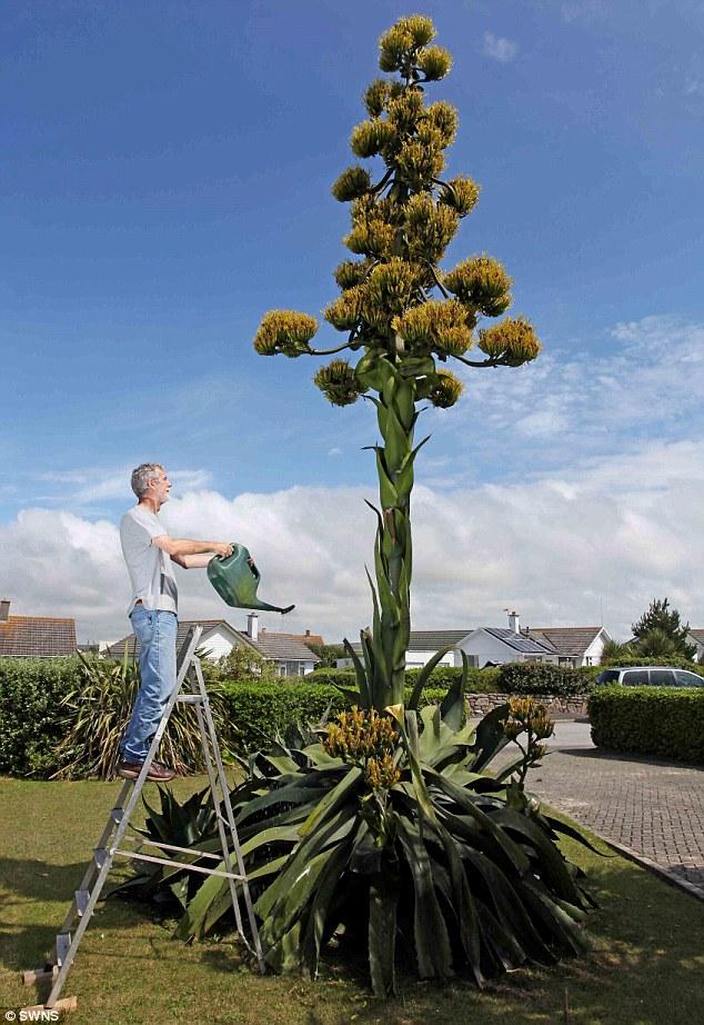 Pokok membesar setinggi 25 kaki dalam masa 4 bulan