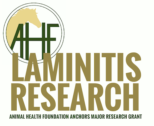 Australian laminitis research grant via Animal Health Foundation