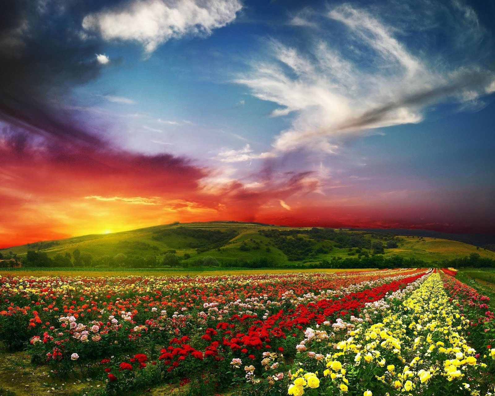 http://3.bp.blogspot.com/-SjEeh5-OSEc/UA093TOIG0I/AAAAAAAACpQ/RjQrHaDxJs4/s1600/bulgaria-scenery-rose-valley-countryside-flowers-clouds-horizon-sun-landscape.jpg