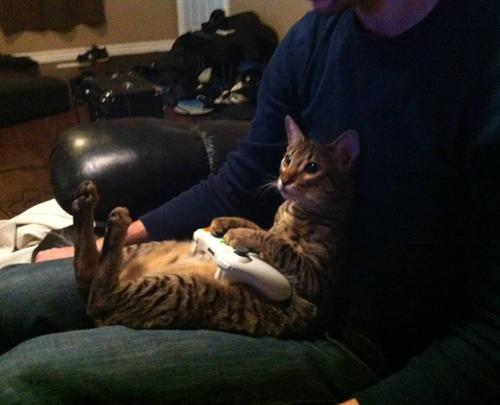 las mejores fotos de humor gráfico con gatos