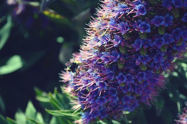 flowers in monterey