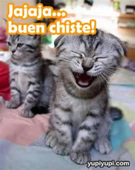 imágenes con frases lindas en gatos