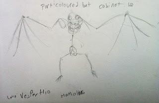Sketchbook Bat Wings Skeleton - Grant Museum of Zoology Field Trip London - Arts Award Bronze Level Art Portfolio Ideas