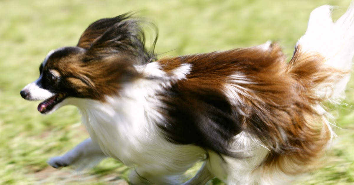 banco de fotos perros   hermosos fondos de pantalla de encantadores