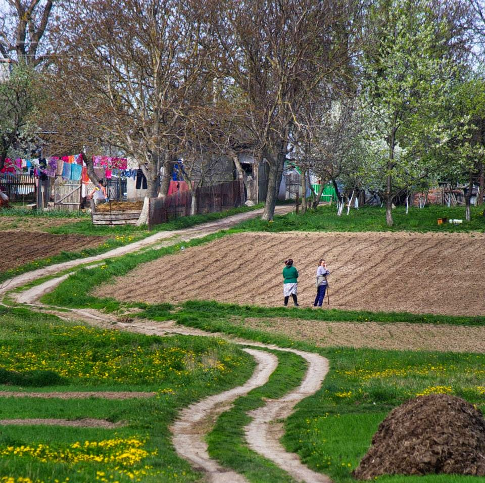 Planting potatoes on the West of Ukraine