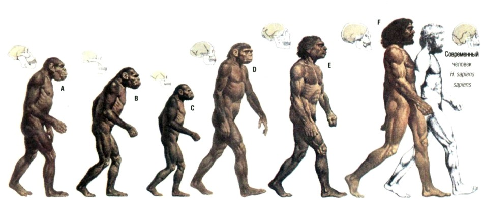 evolution of human art essay To see why works of conceptual art have an inherent investment risk, we must look back at the whole history of art  pleasure and human evolution.