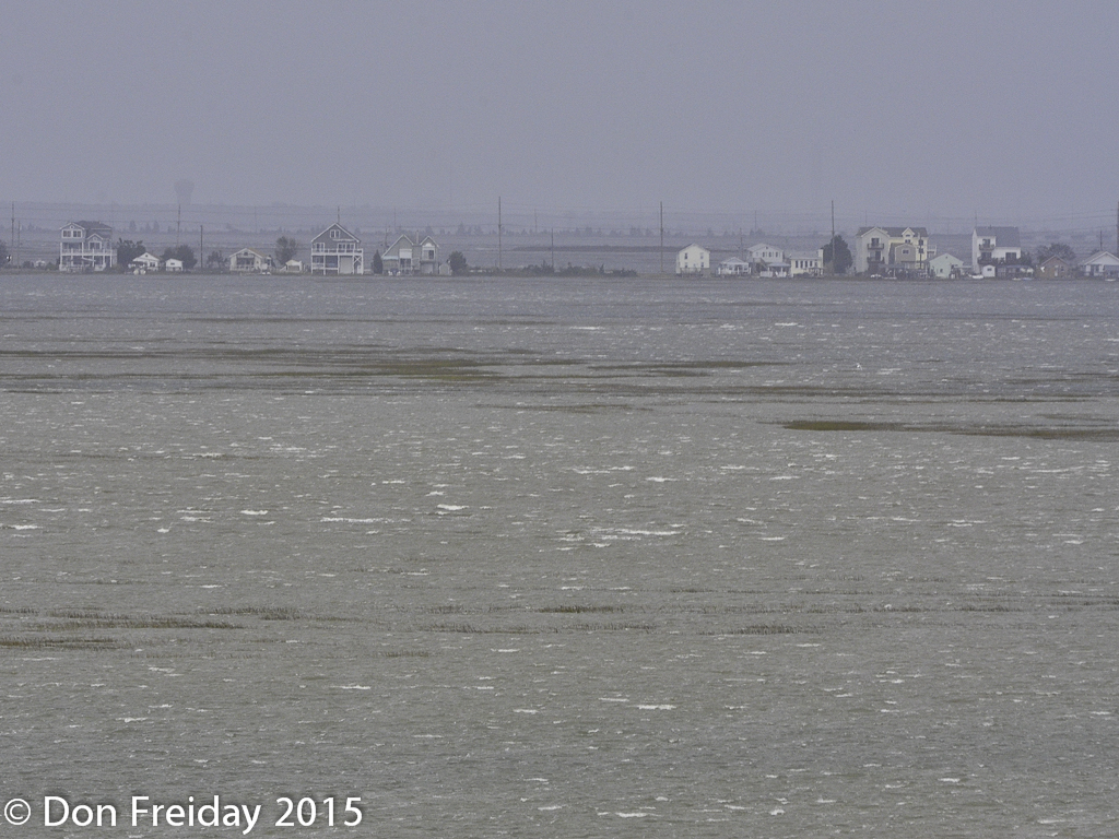The freiday bird blog tides happen plus by the length of their take tides northeasters and sea level rise seriously this is the high tide view of the salt marsh west of stone harbor nj today after days of a nvjuhfo Images