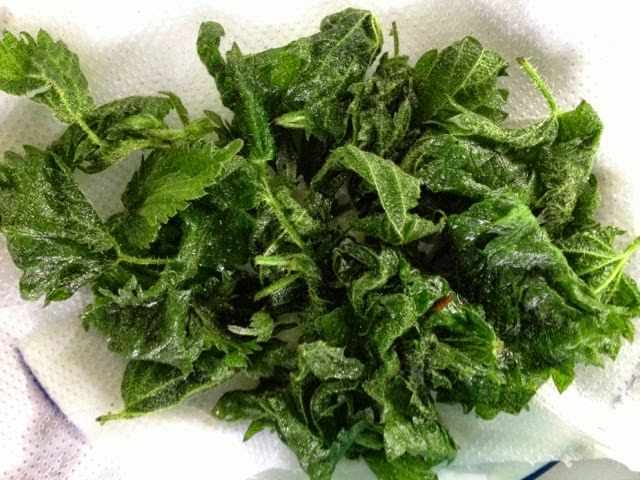 Foraged Wild Food - Nettle Crisps