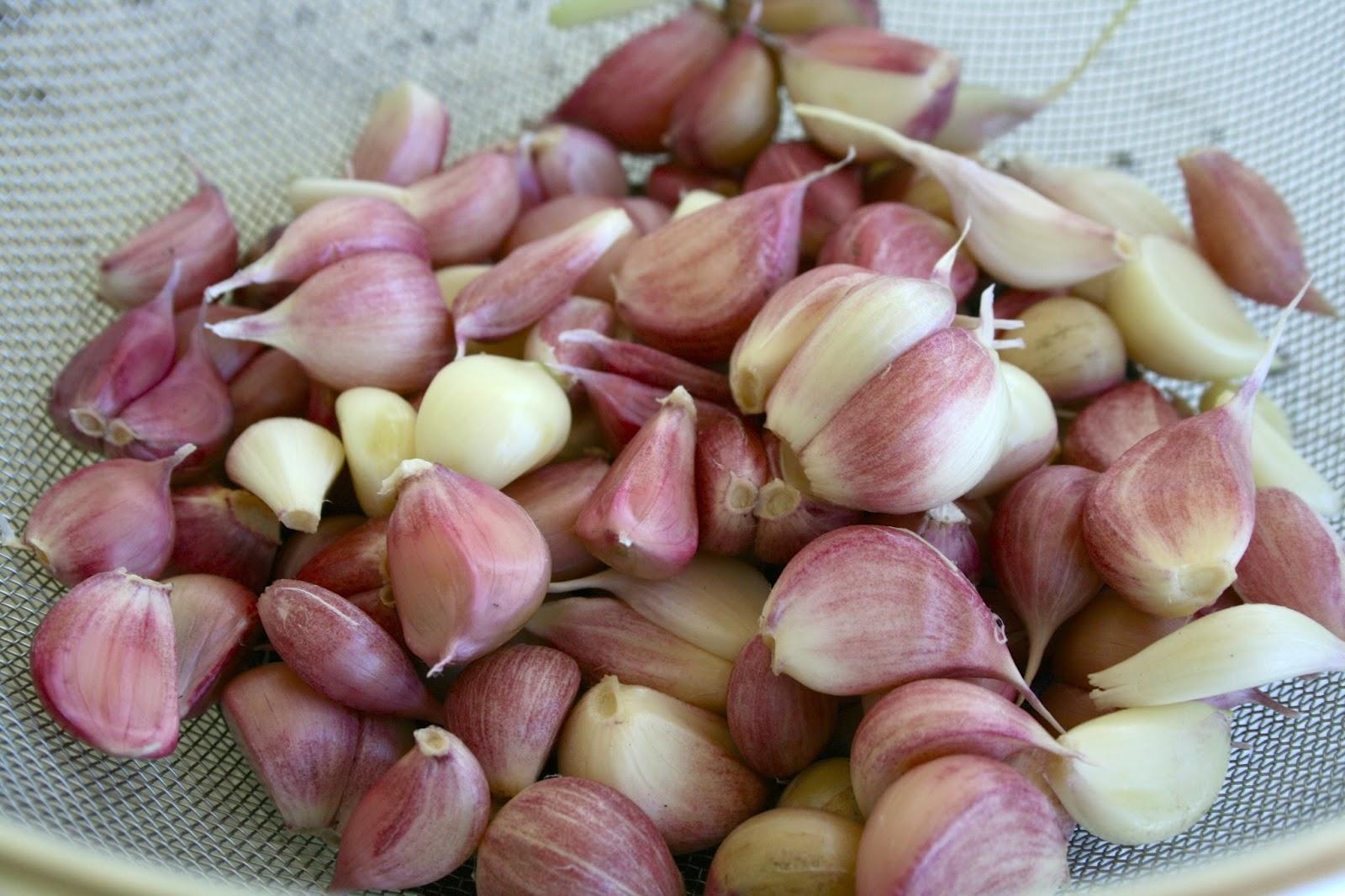 how to make homemade garlic powder