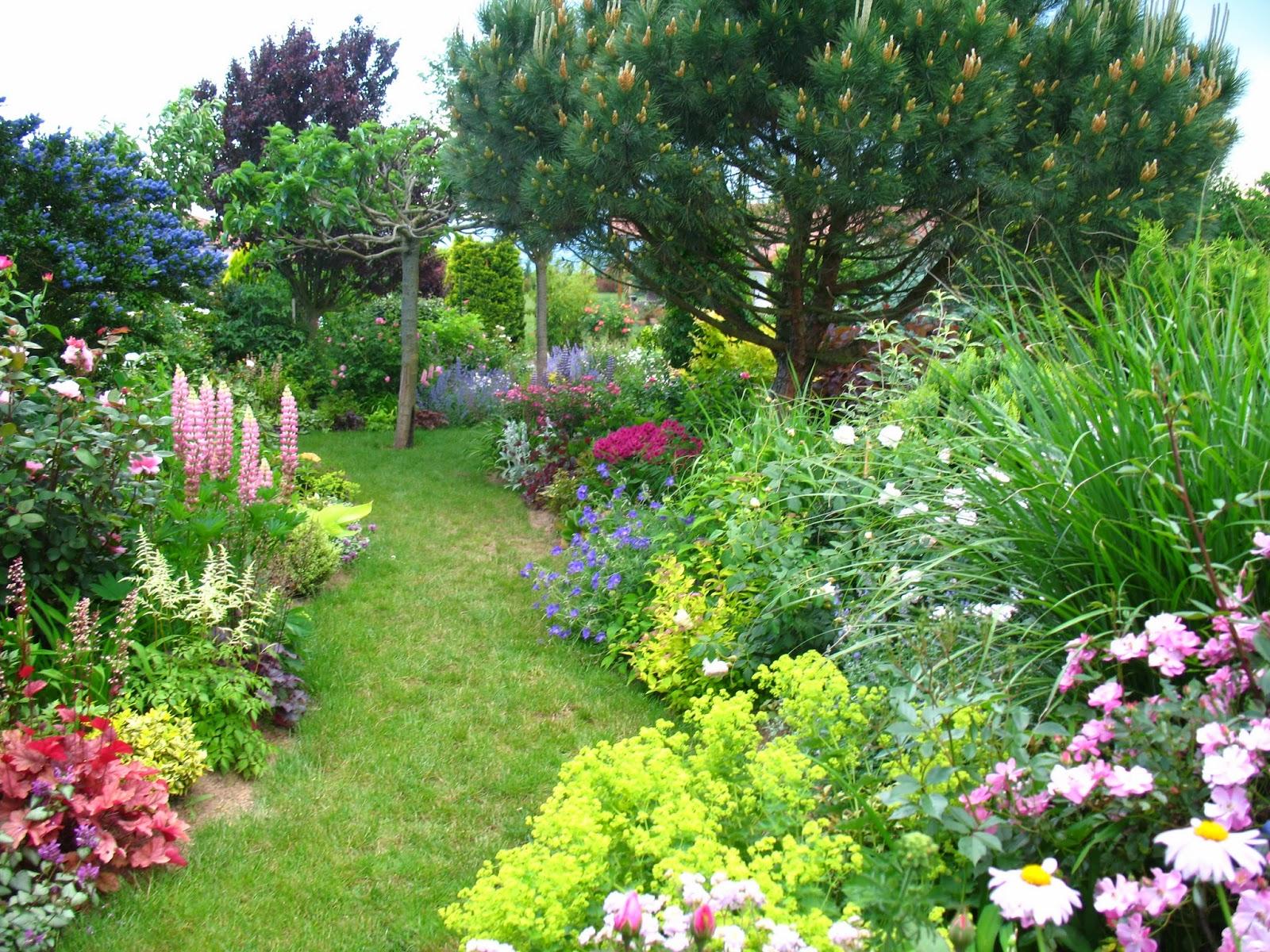 roses du jardin ch neland ambiance du jardin en juin