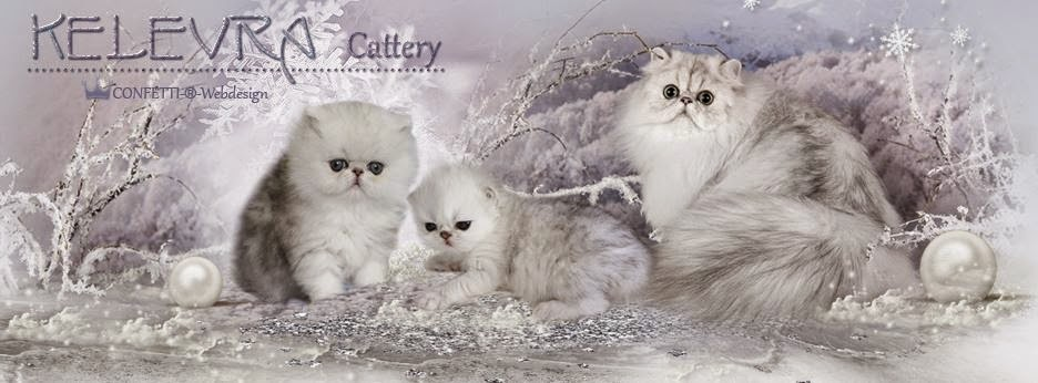 KELEVRA  cattery
