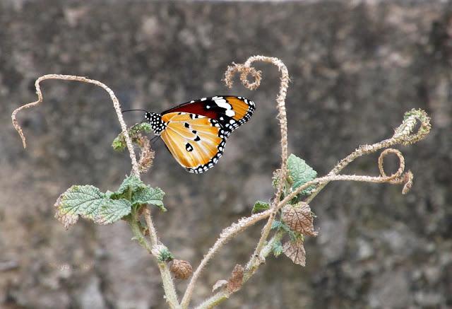 A beautiful orange - black butterfly on a fern