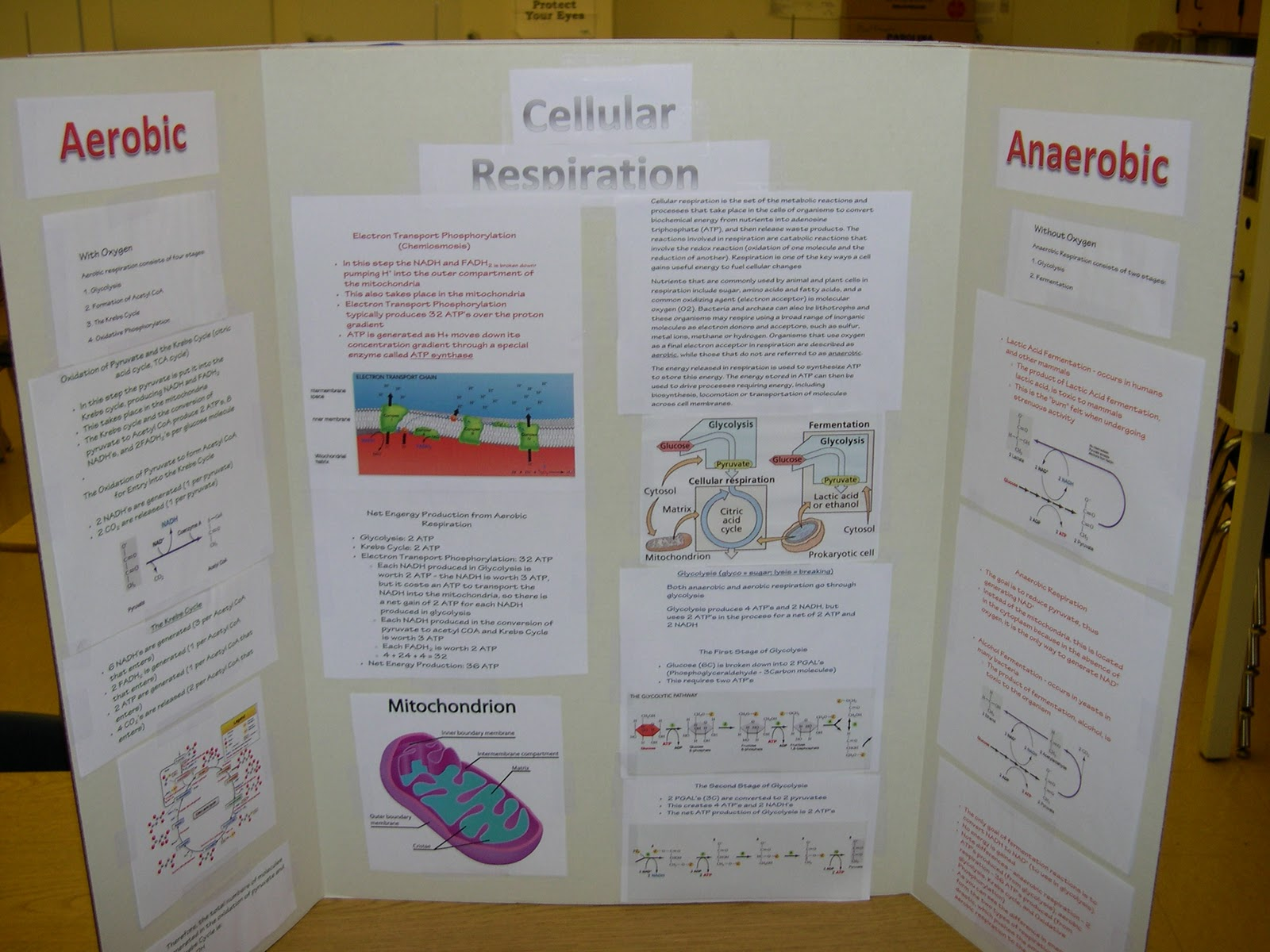 photosythesis and respiration powerpoint Cell energy: photosynthesis & respiration chapter 5, section 1  cellular respiration powerpoint biologyib photosynthesis and cellular respiration (an introduction.