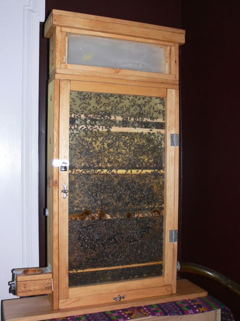Building My Observation Hive The Honey Super