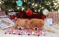 Imágenes Navideñas con movimiento - gigs animados de Navidad