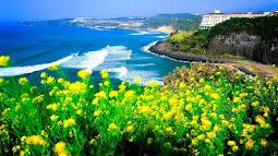 Biển và hoa