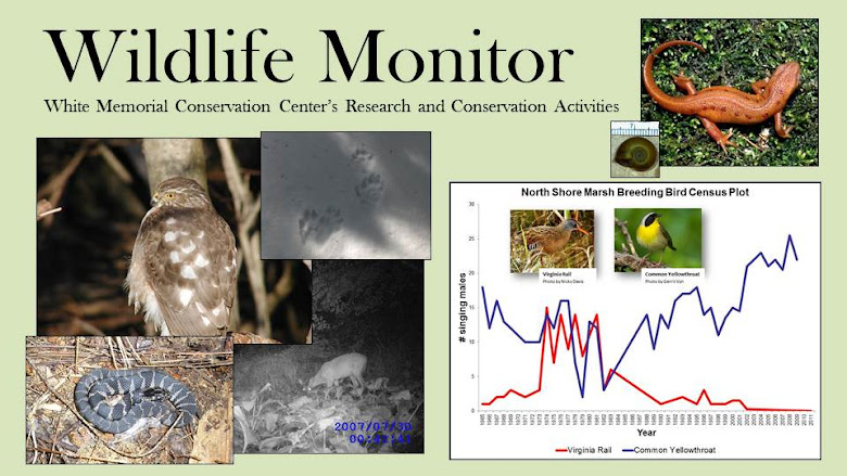 Wildlife Monitor