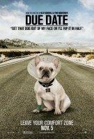 bulldog um parto de viagem