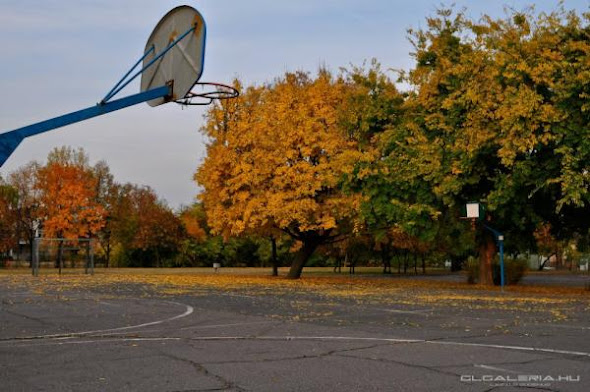 NBA Hoops Around the World TheNbaZone