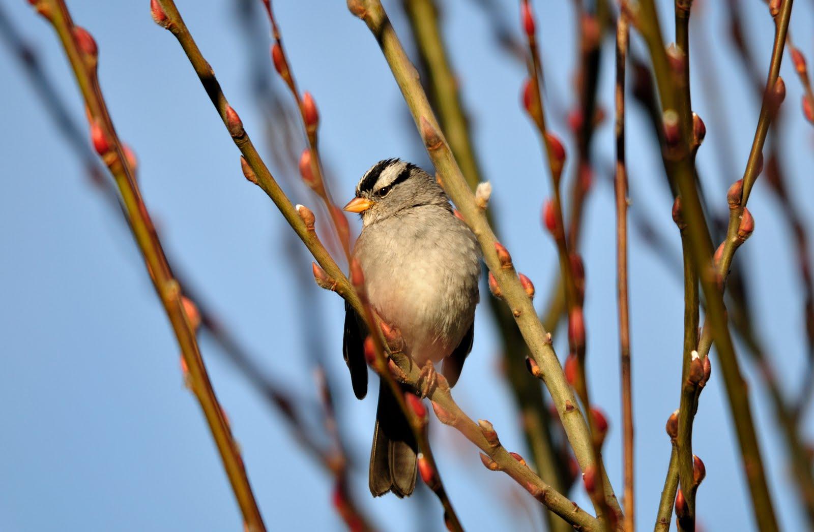 barbara rich photography backyard birding in chico california