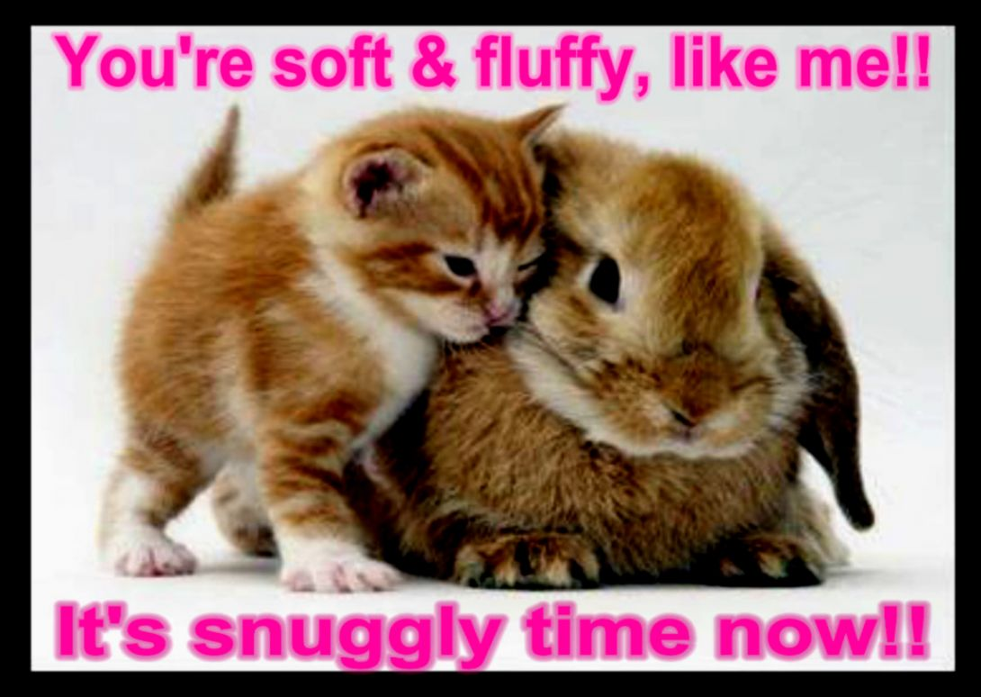 Cute animals pictures with caption