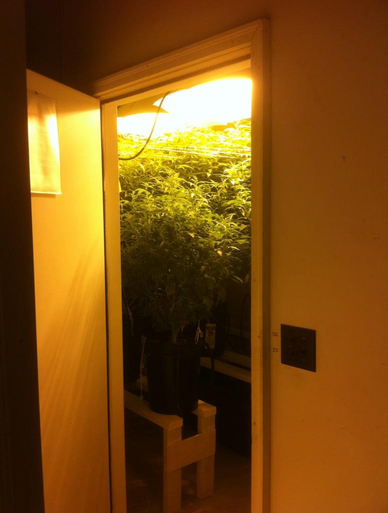 coltivare la marijuana al chiuso