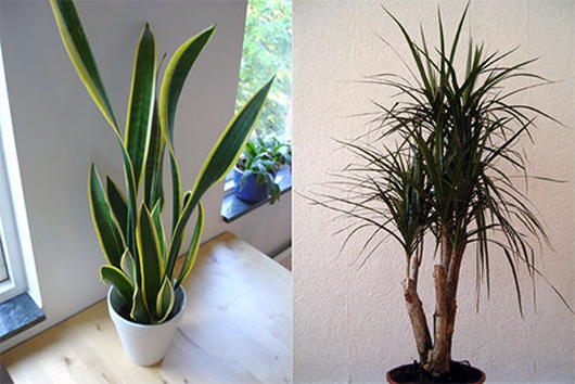 10 best plants to grow indoors for air purification - Good indoor plants ...
