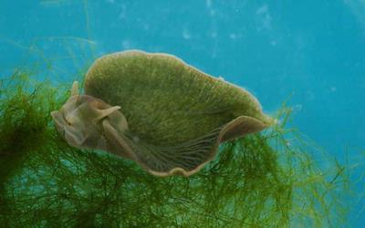 Makhluk Pertama Berbadan Setengah Flora Setengah Fauna