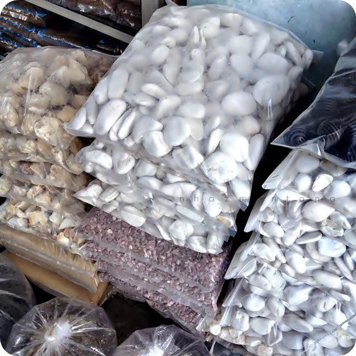 Www Nhazmontana Com Pasar Ikan Hias Gunungsari Surabaya
