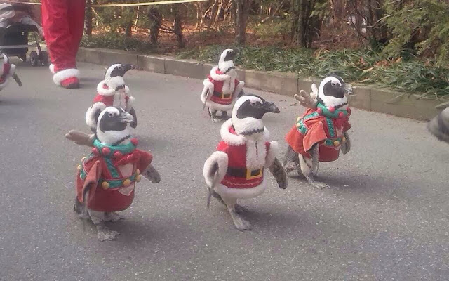 Funny animals of the week - 13 December 2013 (40 pics), penguin in santa costume parade