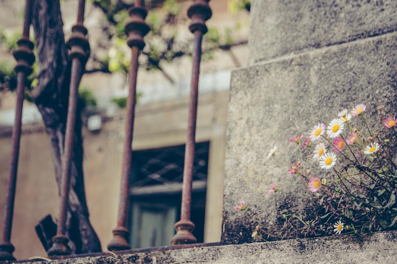 Gänseblümchendetail an Steinmauer