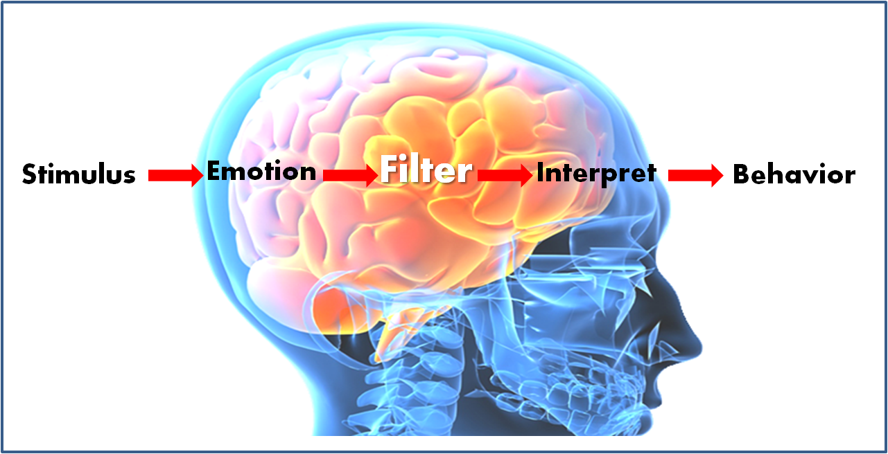 How Emotions Affect Learning Behaviors >> Emotions And Learning