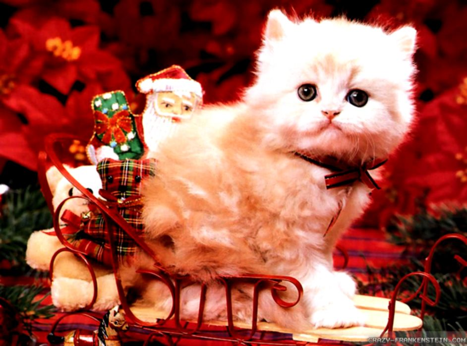 Cute Hello Kitty Christmas All Hd Wallpapers Gallery