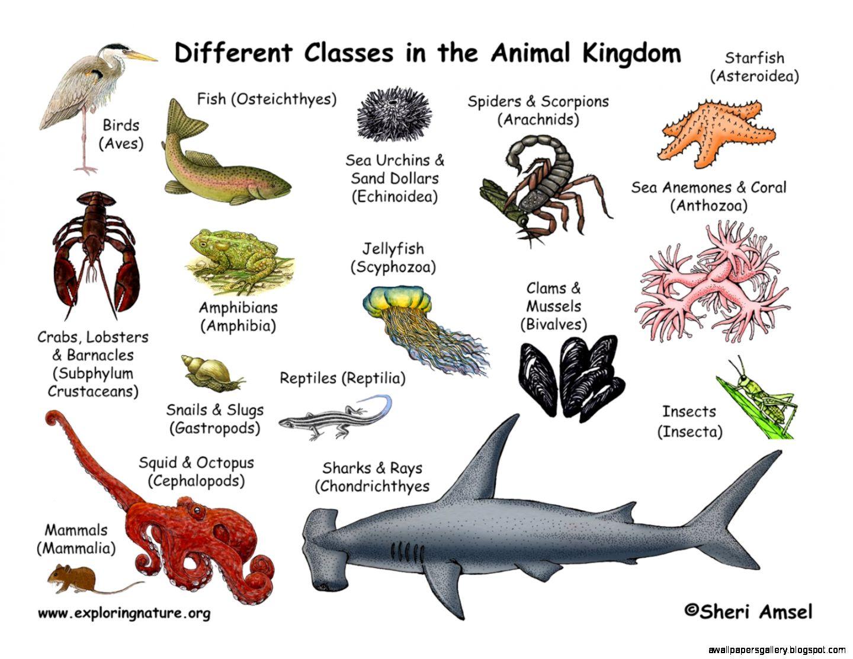 Animal Taxonomy Classification